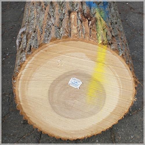 Patriot Hardwoods   Supplier of High Grade Veneer and Saw Logs